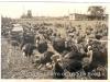 ouimet-turkey-farm-ii-middle-rd-swanton